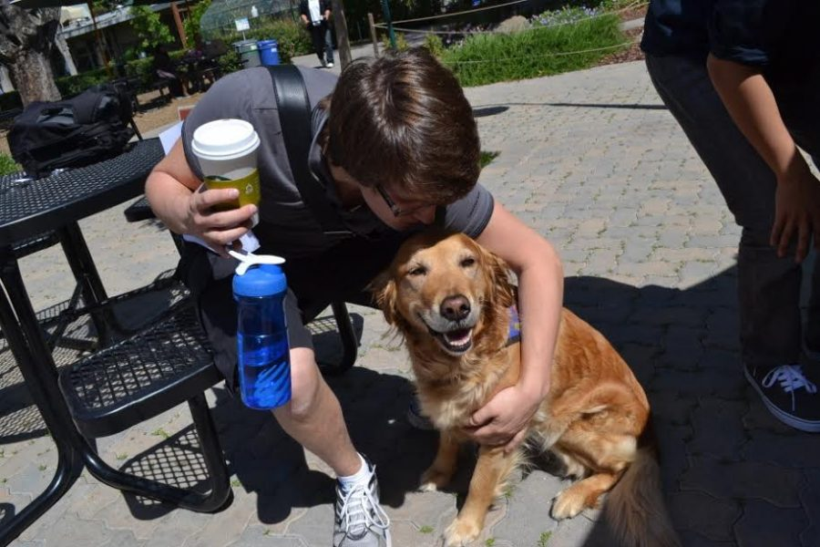 A cheerful therapy dog comforts a student at the Edge last year. Student council plans to continue the tradition of bringing in therapy dogs to relieve student stress.