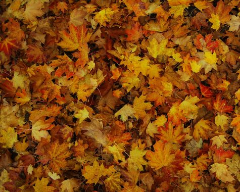 Fall Equinox brings transitions in nature and fashion