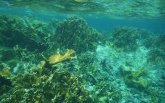 Global Reset: Coral bleaching threatens marine ecosystems