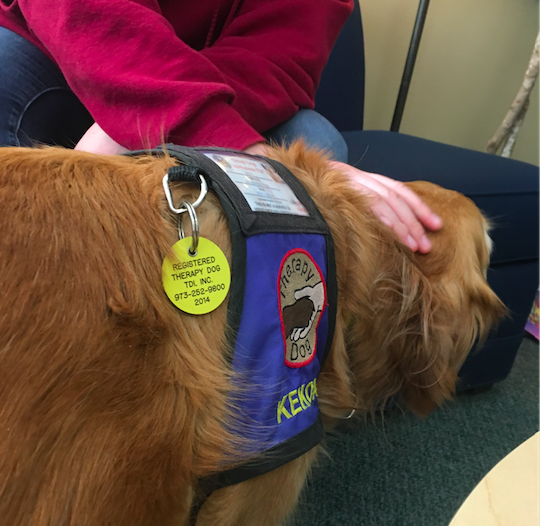 Lou Sanche (10) pets therapy dog Keko in the counseling office during today's morning extra help session. Students can visit the therapy dogs tomorrow and Wednesday during lunch in the counseling office.