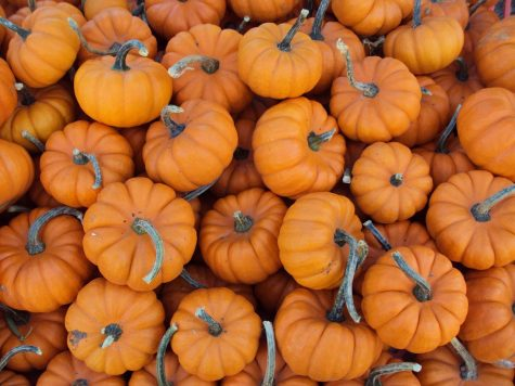 What fall food should you eat or drink?