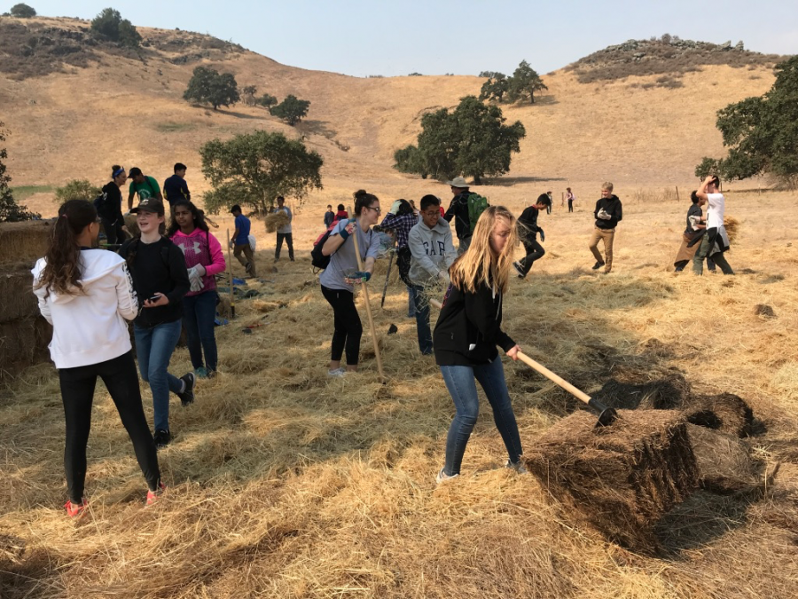 Freshmen work with hoes and other tools to move around bales of hay and grass. They received five of their 10 required service hours during their trip.