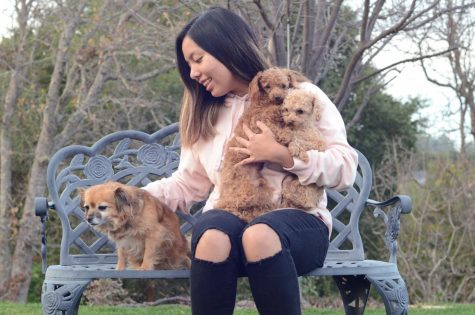 Humans of Harker: Jerrica Liao pours compassion into fostering dogs