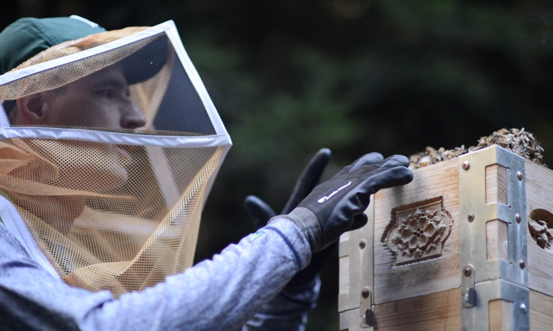 Biology teacher Dr. Thomass Artiss tends to a beehive.
