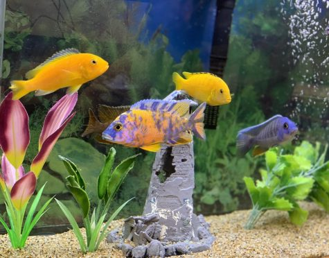 Inside the Dash: Age of Aquarium
