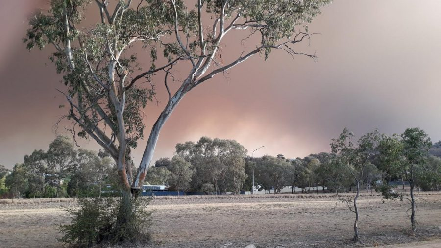 Smoke+fills+the+sky+near+the+property+of+middle+school+math+teacher+Margaret+Huntley%27s+sister+on+the+outskirts+of+the+capital+city+of+Canberra.+Bushfire+smoke+consists+of+water+vapor%2C+various-sized+particles+and+toxic+gases+like+nitrous+oxide+and+carbon+monoxide.