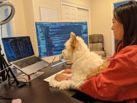 Ysabel Chen (11) works on her digital application Lucky Paw, which she designed to centralize the pet adoption process. She is currently enrolled in Harker